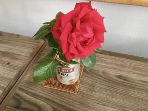 適当な花瓶が見つからなくて缶に庭のバラ。一輪挿しを探す旅に出たい。
